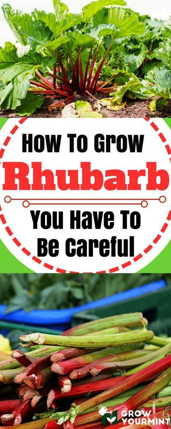 Gardening Tips For Beginners In Hindi Gardening Tips For Rose