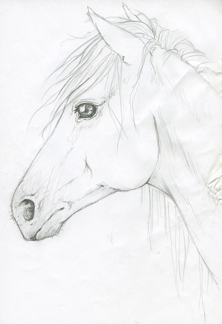 Horse Head by s...