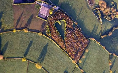 ...Winston Howes, a 70-year-old farmer, created this touching heart-shaped meadow as a tribute to his late wife - by planting 6,000 oak trees in the middle of his field surrounding his home. The heart points in the direction of her childhood home.