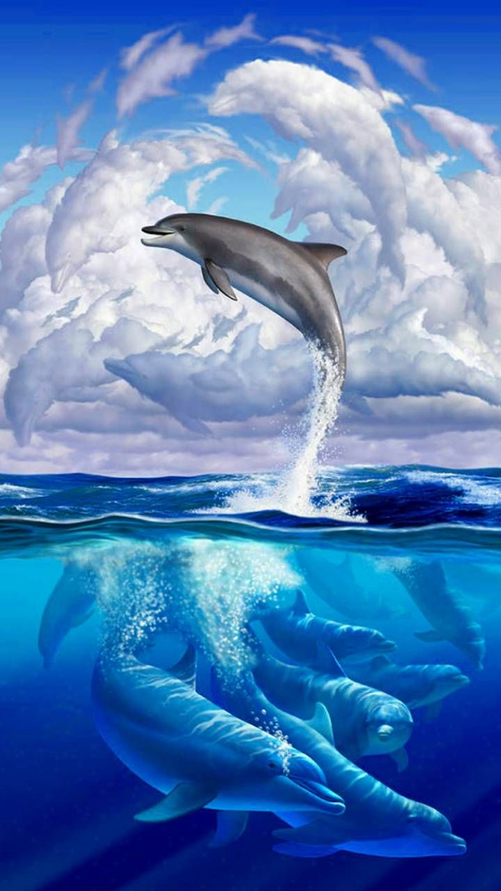The Highest Quality Dolphins Backgrounds For You Iphone Cool Backgrounds In 2021 Beautiful Sea Creatures Dolphin Photos Dolphin Art