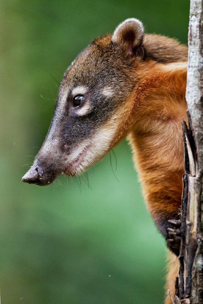 1075 best Animals: Carnivore & Omnivore images on ...