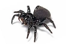 Los Arácnidos: www.losaracnidos.com.ar/  Es una página dedicada al mundo de lo que es las arañas y los escorpiones, es cierto que las fotos que están en esta portada no están en la página pero viene del mismo tema. La web esta con una página de inicio animada en flash, con adicionales que viene en html y css