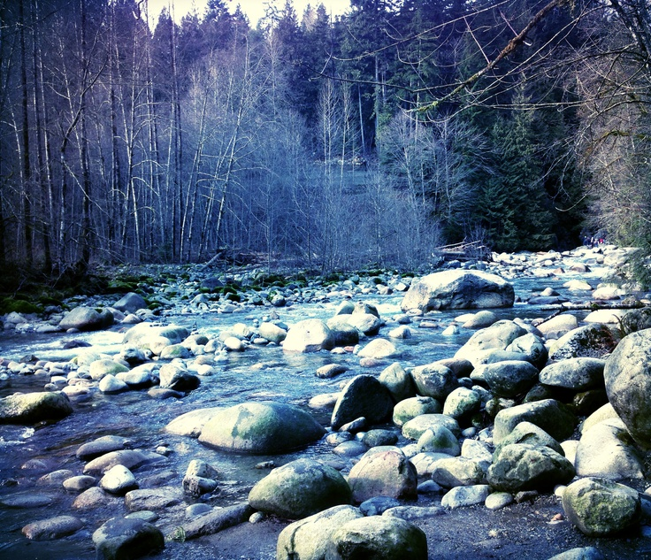 Lynn valley canyon in north Vancouver. Photo taken by Iyshia Brenner