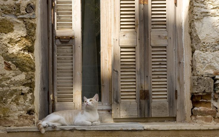 One of the many cats of Greece