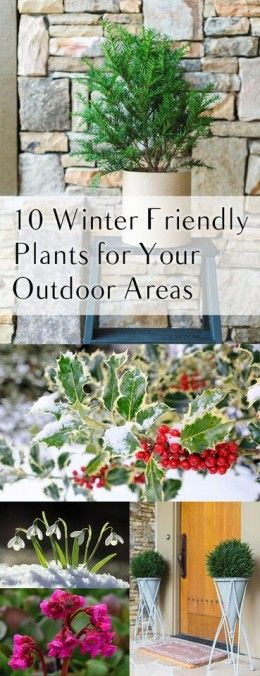 18 best Plants with Winter Interest images on Pinterest | Proven ...
