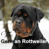 Rottweilers are awesome dogs! Learn what you need to know about raising Rotties properly and help your dog be all that he can be.