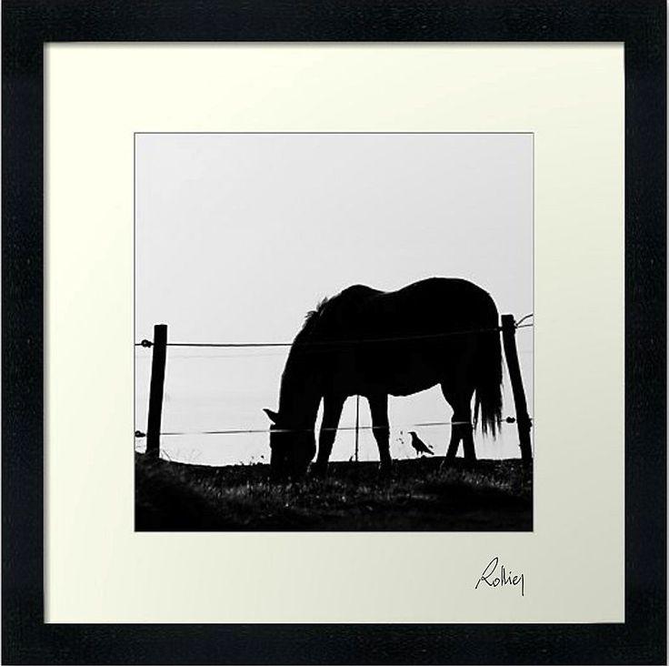 """Photo encadrée de Jean Luc Rollier """"Le Cheval et l'Oiseau"""" 30x30cm"""