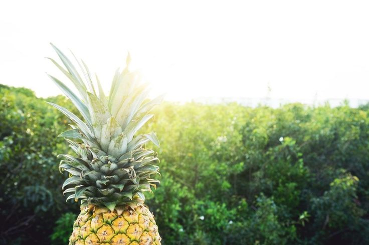 How Effective Is Pineapple Diet For High Blood Pressure?