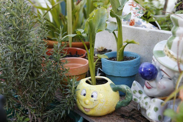 Pormenor do pátio. Cantinnho das plantas.