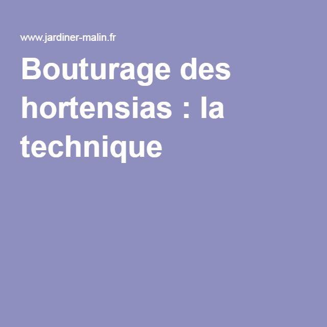 Bouturage des hortensias : la technique