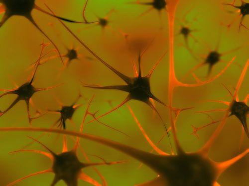 Die Parkinson-Krankheit natürlich besiegen - Kopp Online
