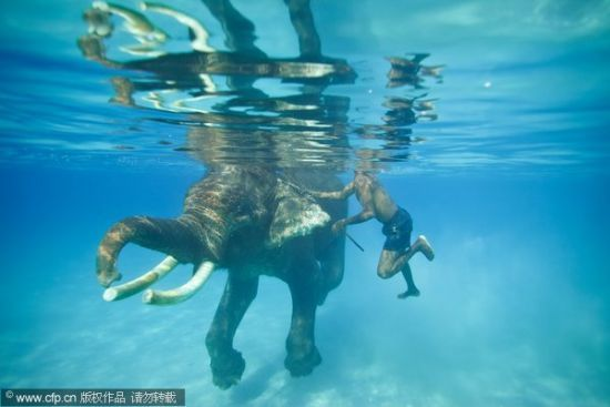 Go snorkeling with an elephant in Phucket, Thailand. Is this real life?