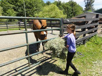 feeding a horse hay