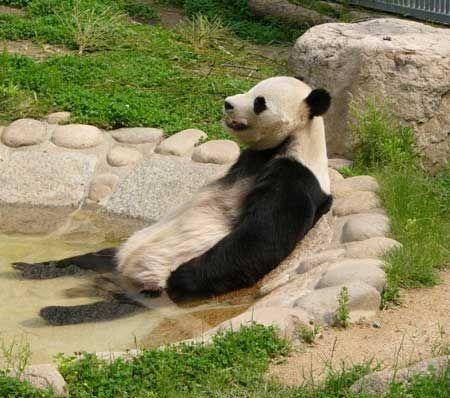 はぁ・・・疲れる・・・ショボ――(´・ω・`)――ンの画像 - できるだけ自然体・・・^^; - Yahoo!ブログ