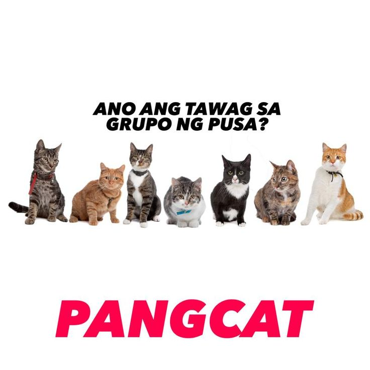 halloween jokes tagalog