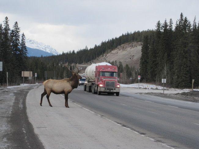 Elk Crossing--Canmore,Alberta