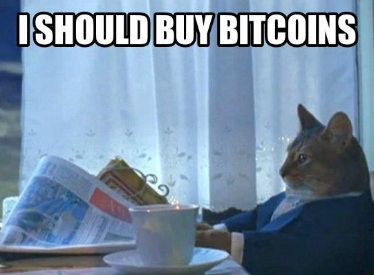 """Business Cat: """"I should buy Bitcoins."""" You and me both - yay for legitimate currency!"""