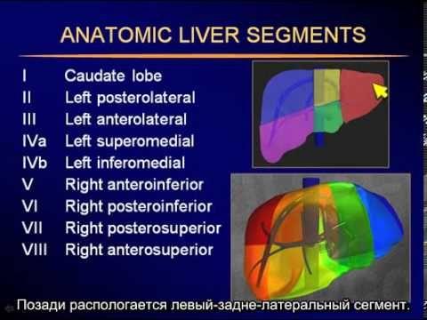 УЗИ печени - Sonography of the liver - YouTube
