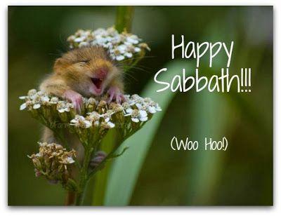 Happy Sabbath, Little Mouse...