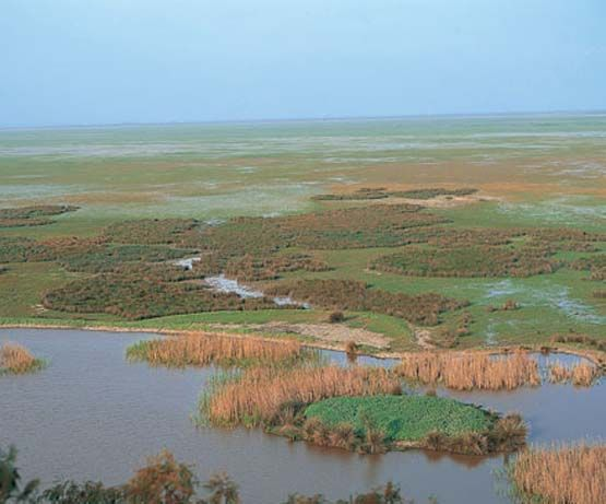 Doñana Marshes (Huelva)