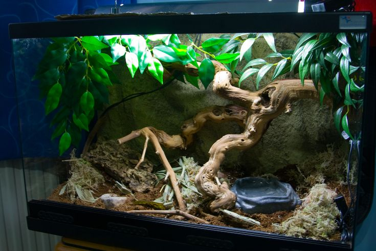 The Corn Snake Forum - new viv advice