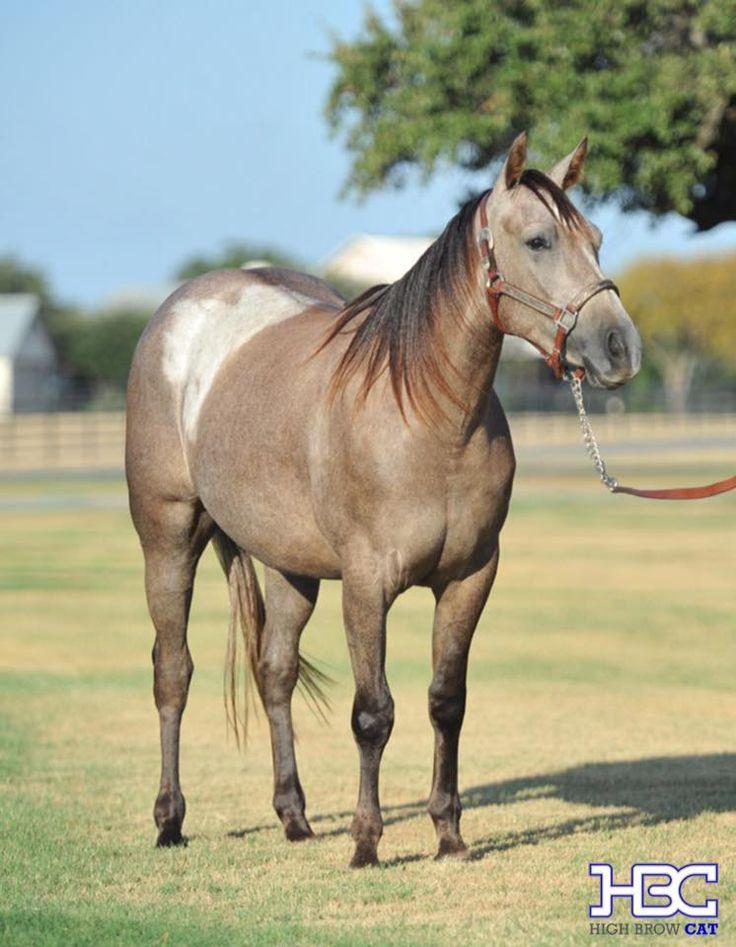 98 best horse color: somatic mutation images on Pinterest ...