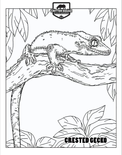 Crested Gecko Coloring Page C S W D Coloring Pages