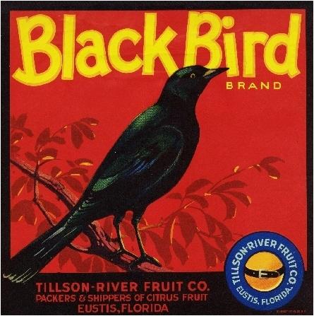 Eustis Florida Black Bird Orange Citrus Fruit Crate Label Art Print | eBay