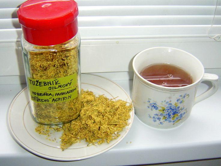 Tužebník jilmový, přírodní aspirin
