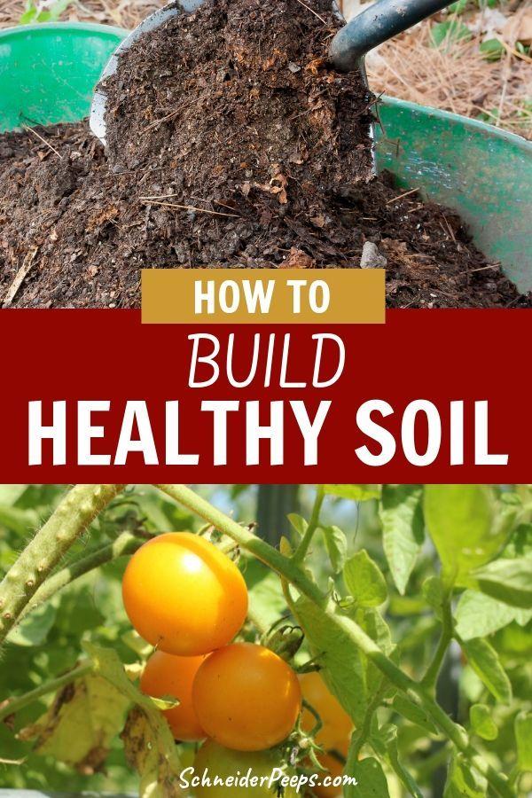 5 Easy Ways To Build Healthy Garden Soil Garden Soil Garden Pests Gardening For Beginners