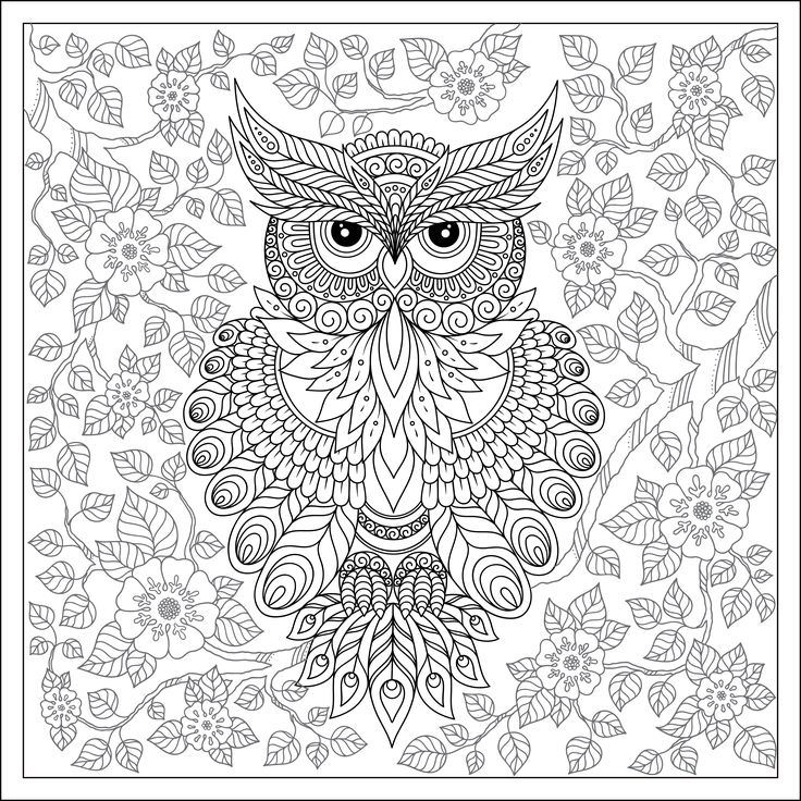 711 Best Coloring Owls Images On Pinterest