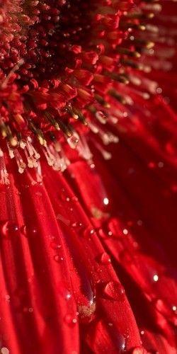 Le Rouge à Rungis : les fleurs
