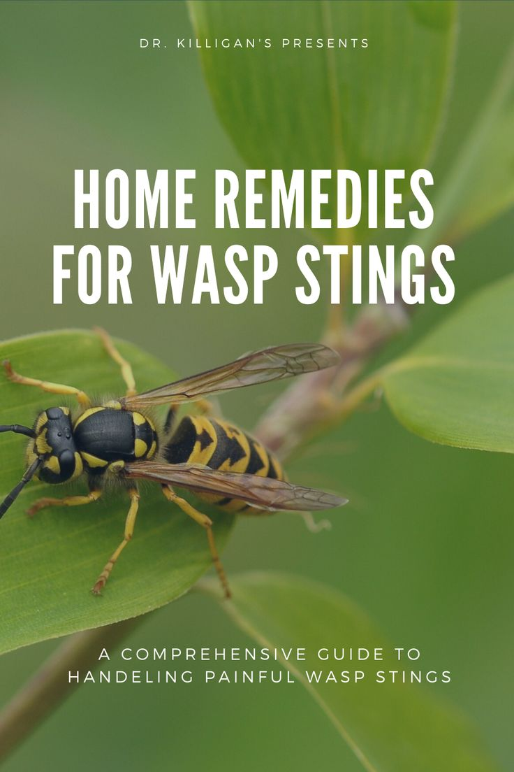 Home remedies for wasp stings dr killigans in 2020