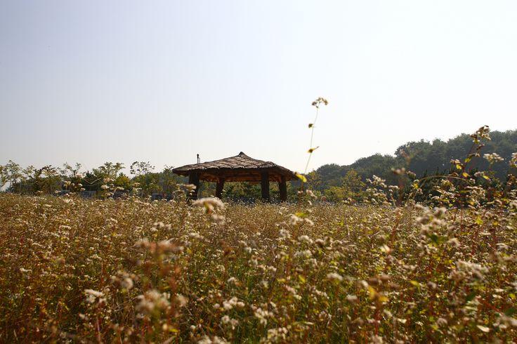 KOREA_Ansan Lake Park (Gyeonggi-do Province) | Koreaholic | Flickr