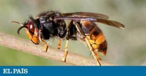 Los centros de salud de Torrejón de Ardoz atendieron a 1.800 personas el verano pasado por la mordedura del insecto