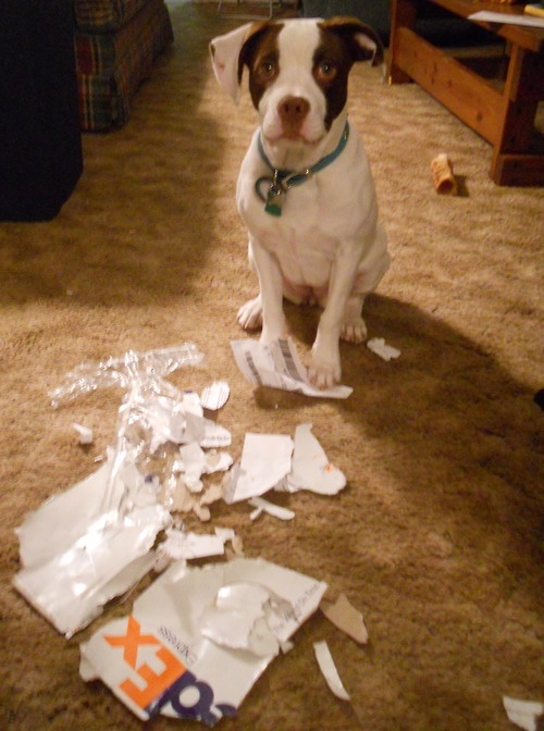I ripped up my mom's Pittsburgh Penguin tickets, still in the FedEx envelope.