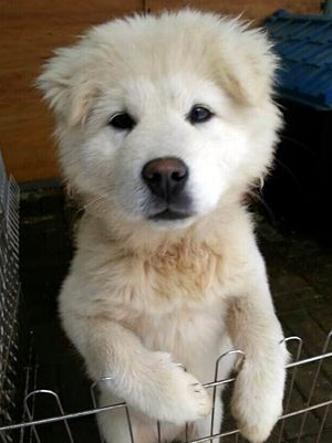 My name's NINA, south korean men wanted to eat me, I've been saved with some friends but... so many other friends are still in barbecue houses or trapped to be eaten, PLEASE SAVE THEM, Here are so many ways to help check this site THANK YOU !