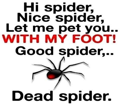 The only perfect spider is a dead one.