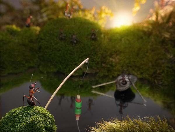 Ant stories via ouzzi.com