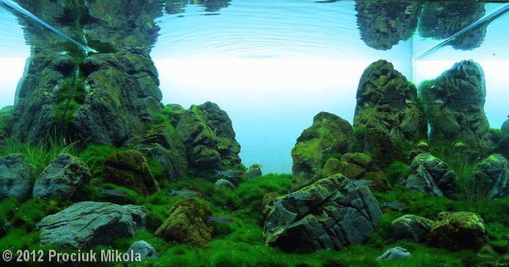 Prociuk Mikola, 2012 AGA Aquascaping Contest