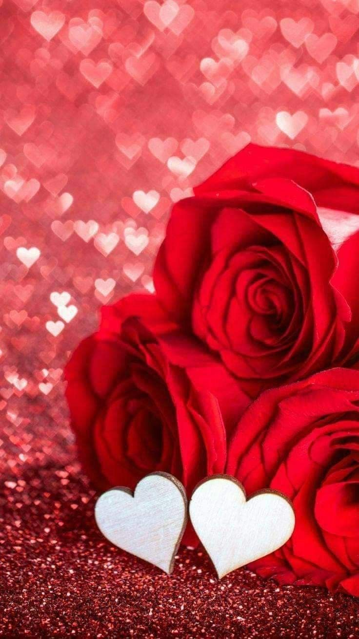 سٲ حـ بڪ حتـﮫ يتوقف قلبي عـ ن ٱلنبـض Rose Flower Wallpaper Red Roses Wallpaper Flower Phone Wallpaper