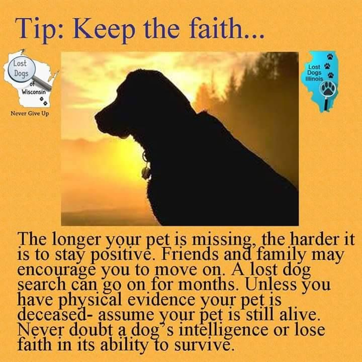 16 best Lost and Found Advice images on Pinterest Animal rescue - lost pet flyer maker