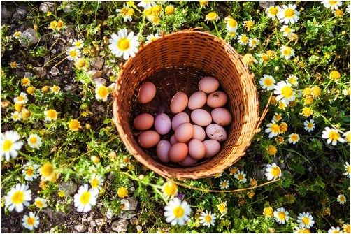 We love spring! What to do with these lovely fresh eggs? A frittata, perhaps...
