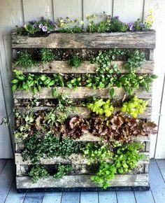 Üppig wachsen die Grünpflanzen zwischen den Lamellen der Palette heraus. Vertikalbegrünung für den Außenbereich Marke Eigenbau – klasse!