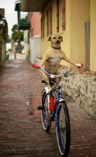 Dog Riding the Bike | See More Pictures | #SeeMorePictures