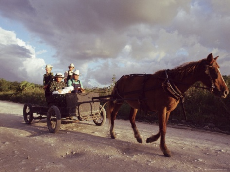 Traditional Mennonite Family w/Pony & Trap - Camp 9, Shipyard, Belize, Central America. Photographic Print by Upperhall Ltd at Art.com.