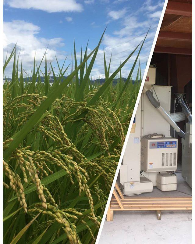 BALIcious 🌴 バリシャスのこだわり❗  メイン🌟となるお肉にも、もちろんこだわっていますが、  お米にもこだわります🎵  バリシャスのお米は、お隣の市の農家さんにお願いして、 必要なぶんだけ、毎回精米してお届けいただいています。  今年も、すくすく成長してます✨と報告あり❗  もうすぐ、新米が届く予定です🎵  右の写真は、刈り取り後、玄米にするまでの加工機械だそうです‼  #BALIcious #バリシャス#京都#新田辺#京田辺#京田辺ランチ#新田辺ランチ#松井山手#城陽#精華#駅近#ランチプレート#記念日#ランチ#隠れ家#ゆっくり#お米#安いランチ#お得#お得ランチ#肉#創作料理#自家製#リーズナブル#女子会#女子会ランチ#ママ会#こだわり#ご褒美