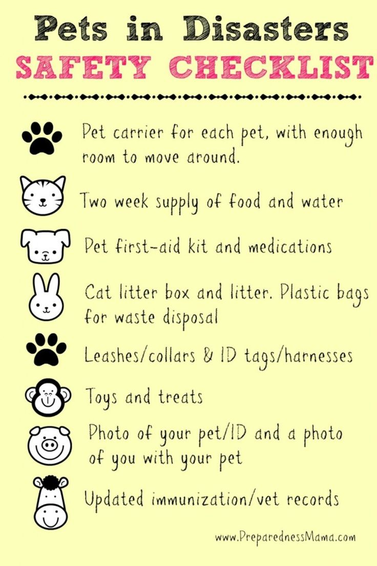 Be Prepared Summer Challenge Wk 7 - Pets in Disasters http://preparednessmama.com/pets-in-disasters/