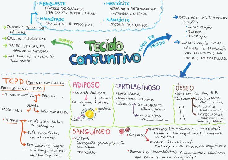 Quer saber tudo sobre Tecido Conjuntivo? Vem dar uma olhada neste mapa mental que vai salvar a sua prova de biologia e garantir sua nota 10!