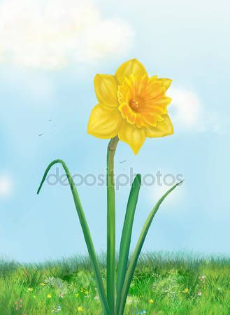 depositphotos_105303634-stock-photo-daffodil-spring-flower-and-sky.jpg (329×450)